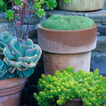 A selection of containers at the Miller Garden