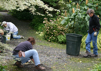 Interns at the Miller Garden