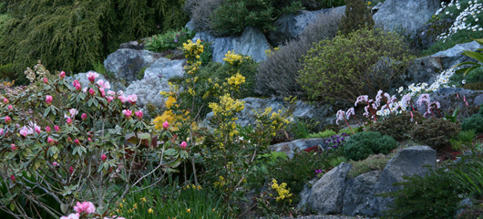Link to Lower Rockery slideshow
