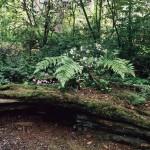 The Upper Woodland, photo by Mary Randlett, 1990