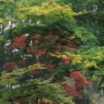 The Upper Woodland, photo by Richie Steffen, 2004