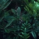 The Upper Woodland, photo by Mary Randlett, 1989