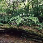 The upper woodland, photo by Mary Randlett, 1990